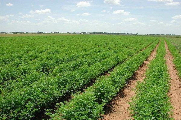 تخصیص پساب به بخش کشاورزی مصوبه کارگروه سازگاری با کم آبی است