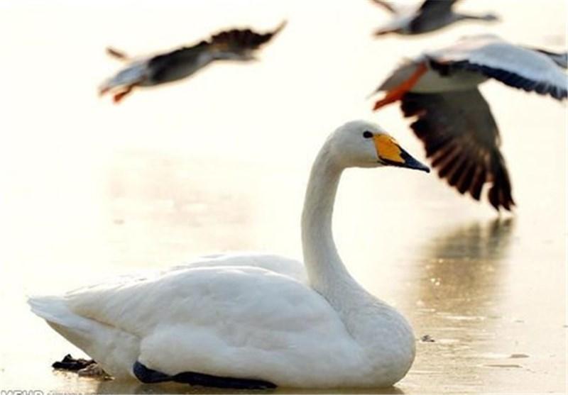 تصاویر پرندگان مهاجر در چینl◉l