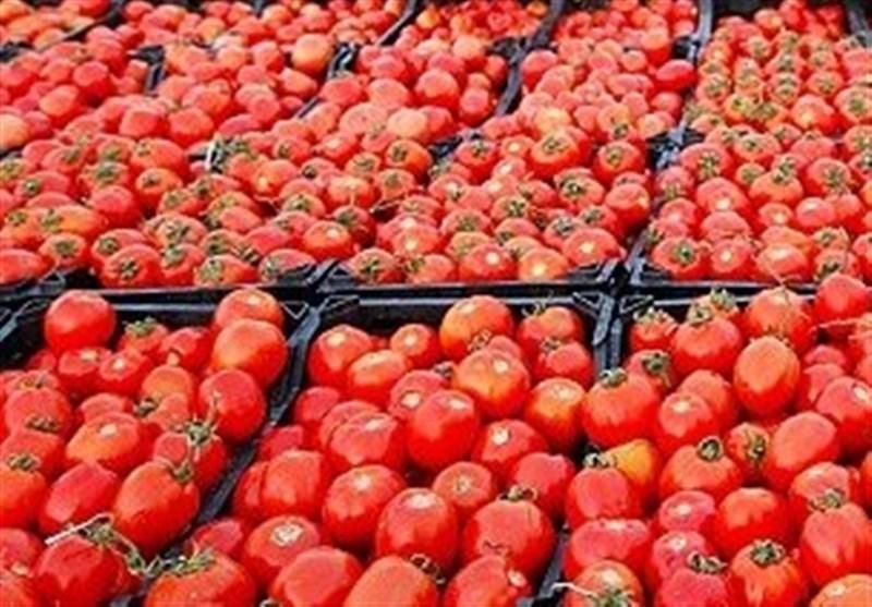 کاهش قیمت گوجه به 4 هزارتومان تا 2 هفته آینده